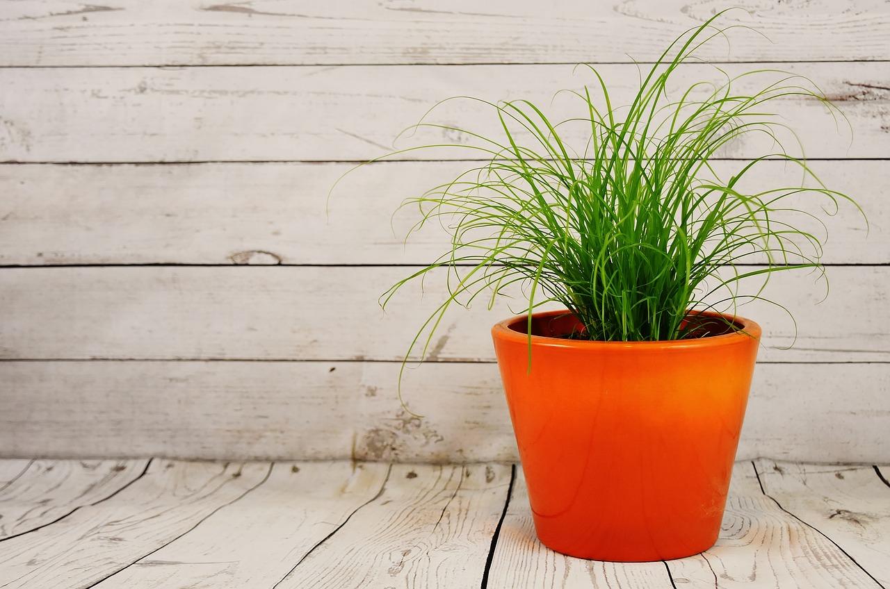 Sztuczna trawa w doniczce a pięknie urządzone wnętrze – sztuczna trawa w doniczce castorama